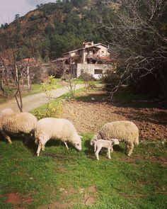Aile ile beraber haftasonu çarşı pazar gezmeler, dışarıda yemeler falan filan 😊🌸🍀☀Burası Fethiye'de yer alan Pastoral Vadi Eko Tatil Çiftliği. Kimlere Önerilir? Çocuklarına doğa ve hayvan sevgisi aşılamak isteyenlere, yoga tayfasına, salaş arayan, huzur isteyen, lüksten kaçan, statükocu kitleden haz etmeyenlere önerilir.☺️✌🏻 📞 0252-6336627 🌿 Detaylar blogda www.kucukoteller.com.tr/pastoral-vadi.html?utm_content=buffer8226d&utm_medium=social&utm_source=pinterest.com&utm_campaign=buffer