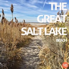 Antelope Island | The Great Salt Lake | The Salt Project | Things to do in Utah with kids