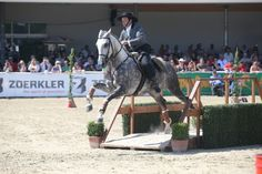 HORSE NEWS - The equestrian Agency - MAGNA RACINO Spring Festival: Bruno Pica da Conceicao (POR) is the new, old Working Equitation World Cup