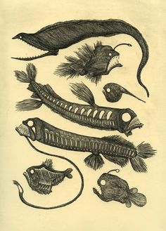 Draw Creatures Deep Sea Friends by Liz Mamont - Sea Creatures Drawing, Deep Sea Creatures, Creature Drawings, Fish Drawings, Animal Drawings, Gravure Illustration, Illustration Art, Sea Drawing, Deep Sea Fishing