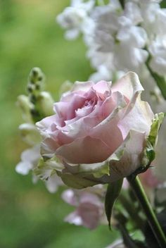Roses and Delphinium ~ Ana Rosa