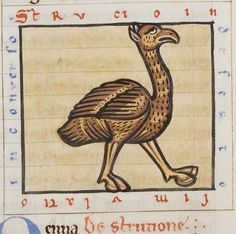 Medieval Bestiary : Ostrich Gallery