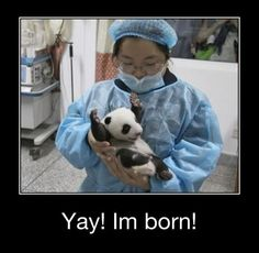 I'm 99.9% sure that's what I looked like when I was born... except I'm a human... not a panda. I wish I was a panda, though.