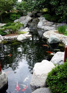 Garden and koi pond