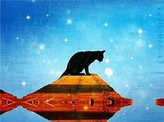 Lovecraft - Enigmatico, il gatto è affine a quelle strane cose  #gatto, #micio, #enigmatico, #peloso, #regale, #Lovercraft, #citazioni, #carattere,