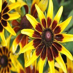 Full Shade Plants, Sun Plants, Live Plants, Tall Plants, Outdoor Plants, Sunflower Seedlings, Tomato Seedlings, Flowers Perennials, Planting Flowers
