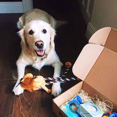 One of our many happy Ruby & Duke #Dukebox dog toy and treat customers. www.rubyandduke.com  #dogsofinstagram #dogstagram #dogs #dogsrule #doglove #doglovers #doglife #dogoftheday #doggy #doglover #doggie #dogscorner #dogofinstagram #dogsofinsta #dogwalk #dog_features #doggies #dogsandpals #dogloversofinstagram #dogdays #dogsofinstaworld #dogcrushdaily #dogslover Dog Walking, Dog Toys, Dog Life, Duke, Doggies, Dog Lovers, Corgi, Happy, Instagram Posts
