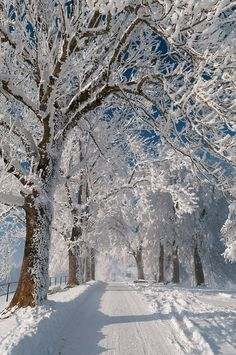 photo scenery One of the most beautiful sceneries s snow covered road and trees. Living in Michigan I've taken lots of these pics :) Winter Szenen, Winter Love, Winter Magic, Winter Christmas, Snow Pictures, Snow Images, Winter's Tale, Snow Scenes, Winter Beauty