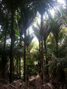 Palmbomen onderweg naar Whale bay