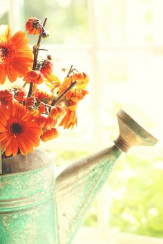 Beautiful orange flowers in a watering can