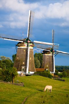 late summer afternoon in Stompwijk, Zuid Holland, The Netherlands Netherlands Windmills, Holland Windmills, Old Windmills, Holland Netherlands, Travel Netherlands, South Holland, Rotterdam, Utrecht, Places Around The World