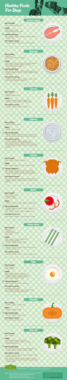 Healthy Foods for Dogs infographic - consider feeding your dog the foods on this graphic to give them healthy vitamins, minerals and nutrients.