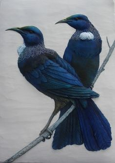 Tui, native NZ blue birds by Craig Fletcher. Pretty Birds, Beautiful Birds, Animals Beautiful, Cute Animals, Tui Bird, New Zealand Art, Nz Art, Maori Art, Kiwiana