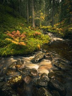Deep into the woods - Boreal mountain forest in autumn time. Forest Photography, Faeries, Norway, Woodland, River, Deep, Fantasy, Mountains, Landscape