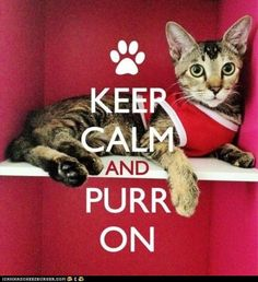 Keep Calm and Purr On!