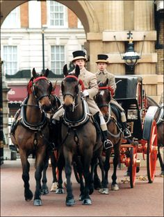 The Royal Mews, London, England is now open to the public for the first time.