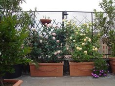 1000 images about terrazze arredate con piante on for Terrazze arredate