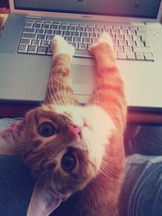 Thus it begins,with a kitty with thumbs and a laptop. :)