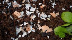Ütős tippek kertészeknek: ezekkel a trükkökkel rengeteg időt és pénzt takaríthatsz meg Egg Shells In Garden, Sensitive Plant, Clean Pots, Make Your Own, Make It Yourself, Soil Improvement, Beautiful Nature Wallpaper, Tomato Plants, Potting Soil