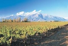 This month we zero in on the Maipo Valley, one of four wine regions within the vast Central Valley of Chile. Maipo lies immediately east of Chile's capital city Santiago (in fact, Maipo's border starts within city limits). It is one of the oldest wine regions in Chile—the first vin