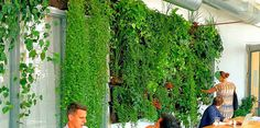 Greenery NYC is a Brooklyn based plant and garden design company, specializing in urban landscape design, home and office plants, rooftop gardens and events. Green walls