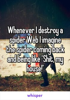 "Whenever I destroy a spider Web I imagine the spider coming back and being like ""Shit, my house!"""