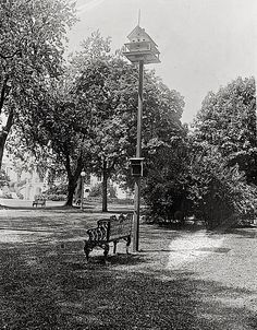 First Lady (1921-23) Florence Harding was a great animal lover who installed birdhouses and squirrel huts around the Wh. Hse. grounds.  She also had the animal trophy heads removed from the State Dining Room.  Photo via Library of Congress.