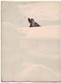 yamamoto masao- Disappearing deer:... is 95% done.
