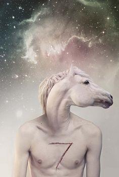 #edward & me #seven horses #symbiosis