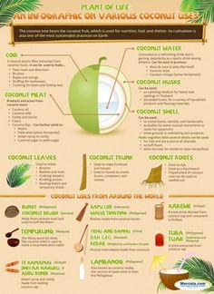 coconut health benefits  #paleo #healthy http://paleoaholic.com/
