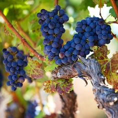 Brides: Honeymoon Itinerary: Napa and Sonoma   Honeymoons   Brides.com Us Honeymoon Ideas, Sonoma Wine Country, Napa Sonoma, Wall Mount Faucet, Best Bathroom Designs, Romantic Destinations, Napa Valley, Amazing Bathrooms, Best Part Of Me