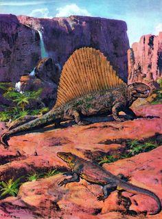 Dimetrodon and Varanosaurusby Zdeněk Burian