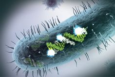 Counting small RNA in disease-causing organisms