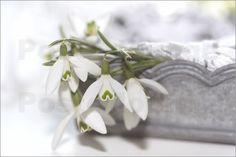 UtArt - Schneeglöckchen in silberner Schale