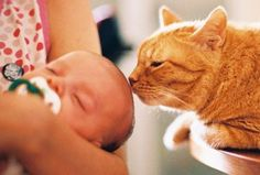 Exclusively Cats Veterinary Hospital Blog: Hello, baby! - Preparing your cat for a new addition to the family