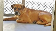 AT Carson Animal Shelter, CA (310) 523-9566  ID#A4848450-  Danillo was left at the shelter by his owner after only one of their dogs was reclaimed.