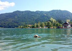Urlaub mit Hund am Weissensee