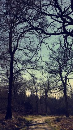 Trees ©karenmiley Contemporary Landscape, Fine Art Photography, Trees, Celestial, Sunset, Abstract, Outdoor, Summary, Outdoors