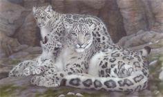 snow leopard family - Painting Art by Sandra Temple - Nature Art & Wildlife Art - Realistic flora & fauna in all mediums - Temple Art Family Painting, Painting Art, Wildlife Art, Snow Leopard, Big Cats, Love Art, Original Art, Art Pieces, Art Gallery