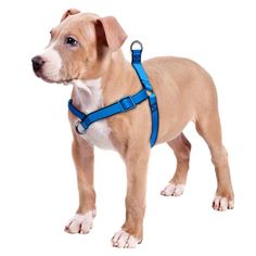 Didog Adjustable No Pull Dog Harnesses,Adjustable Step In Walking Pet Harnesses Fit Medium and Large Dogs Walking ,Training, Climbing and Hiking -- Check out the image by visiting the link. (This is an affiliate link and I receive a commission for the sales)