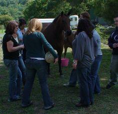 As atividades ao ar livre com os cavalos quando realizadas em grupo permitem aos mais tímidos explorarem as suas competências sociais e pessoais num contexto emocionalmente seguro, desafiante  e divertido!