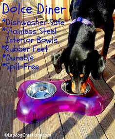 Penny knows the benefits of the Dolce Diner - do you? The dishwasher safe elevated feeding dishes are durable and dishwasher safe! ©LapdogCreations #LapdogCreations #sponsored #LovingPets http://www.lapdogcreations.com/2016/02/loving-pets-dolce-diner-fit-for.html