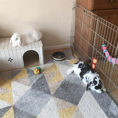 🙅🏼♀️🙅🏻♂️ No entry for hoomins! Only chilling buns allowed 😇 . Bunny Cages, Rabbit Cages, Bunny Rabbits, Baby Bunnies, Flemish Giant Rabbit, Rabbit Enclosure, Ferret Cage, Bunny Room, Rabbit Ideas