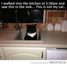 This is not my cat… I laughed out loud!