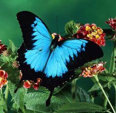 120+ Beautiful Butterflies // Amazing Blue butterfly, Red butterfly, Yellow butterfly