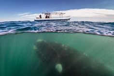 Il gigante e la barchetta » Fotografia di Justin Hofman