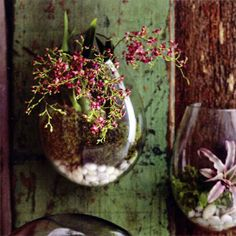 Recycled Hanging Wall Terrarium