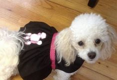 Small Dog Costumes, Dog Halloween Costumes, Halloween Party, Large Dogs, Small Dogs, Poodle Skirt Costume, Dog Bones, Dog Leash, Dog Mom