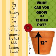 Container Gardening Ideas Planting depth revealed: What can you grow in a 12 inch container? Growing Veggies, Growing Herbs, Growing Carrots, Container Plants, Container Gardening, Organic Gardening, Gardening Tips, Vegetable Gardening, Balcony Gardening