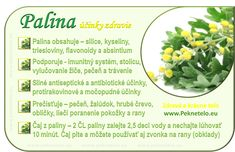Info palina prava Raw Food Recipes, Healthy Recipes, Food Art, Natural Health, Life Is Good, Detox, Food And Drink, Fruit, Vegetables